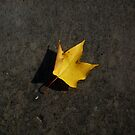 Lonely Leaf by Alison Johnson