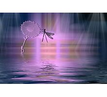 Dragonfly silhouette Photographic Print