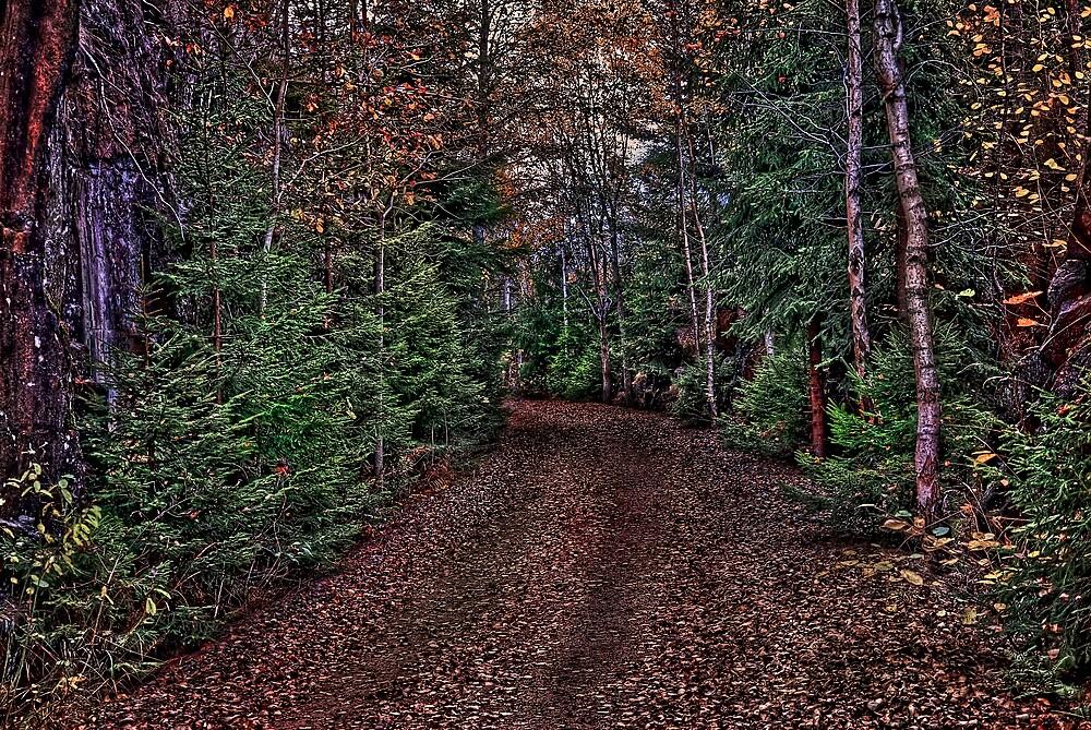 On The Path by geirkristiansen