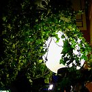 Plant gowing around light, Passage Jouffroy, Paris. by mkl .