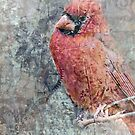 Cardinal Composite by suzannem73