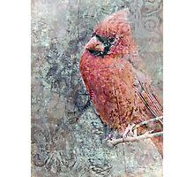 Cardinal Composite Photographic Print