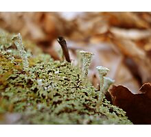 Tiny little beings Photographic Print