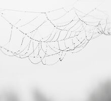 Web by jez92