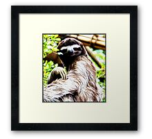 Sloth Painting Framed Print