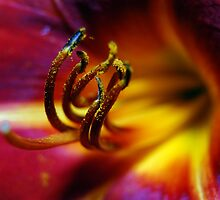 Macro Flower by William Hardman