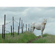 Little Horse on the Prairie Photographic Print