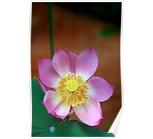 Large Lotus Flower #2, Thailand  Poster