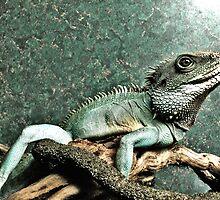 Lizard by Danielle Golding