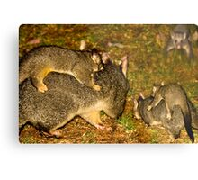 The Possum Nursery Metal Print