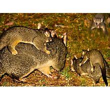 The Possum Nursery Photographic Print