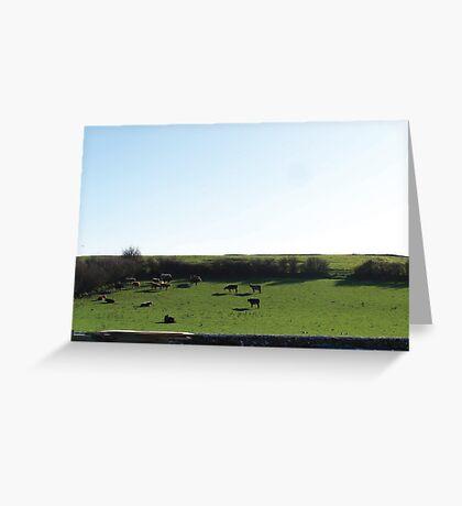 Irish Cows :) Greeting Card