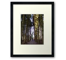 A Walk through in the trees Framed Print