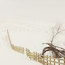 The Fence Line by lorilee