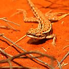 Military Dragon (_Ctenophorus isolepis_) by tarnyacox