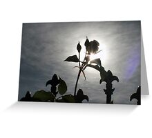 Rose Silhoutted Greeting Card