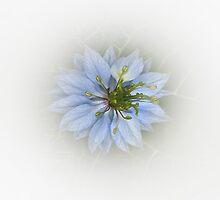 Springtime blues . . . by Rosalie Dale