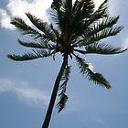 Palm in Sun by Jen Hendricks