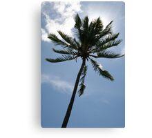 Palm in Sun Canvas Print
