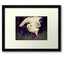 Playing With Purple Feathers Framed Print