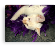 Playing With Purple Feathers Canvas Print