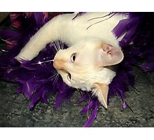 Playing With Purple Feathers Photographic Print