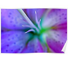 Lilly macro... Poster