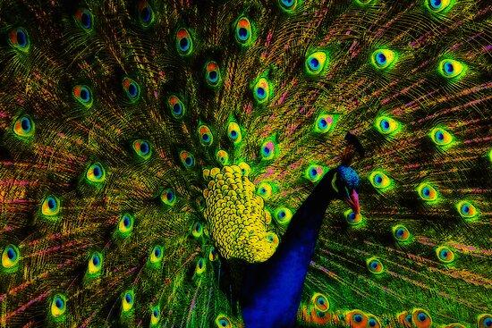 Kaleidoscope by Varinia   - Globalphotos