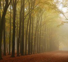 Continuing the foggy morning tour by jchanders