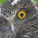 Powerful Owl by Steve Bullock
