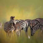 Zebras. by Lyn Darlington