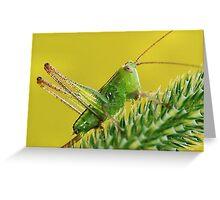 Green Jewel Greeting Card