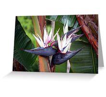 Giant Bird of Paradise Greeting Card