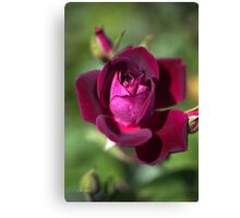 Love Of The Summer Rose Canvas Print