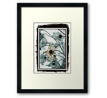 Cosmos (pig/pd)  Framed Print