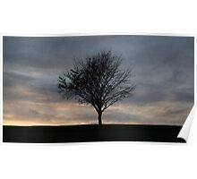 Silhouetted Tree at Dusk Poster