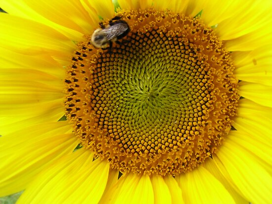 Bee on the Sun by Kathy Weaver