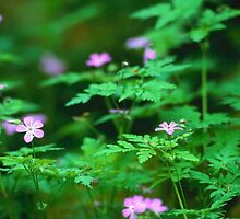 FOREST FLOWERS by preetsrah