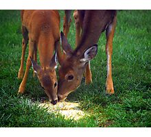 Mother and Fawn  Photographic Print