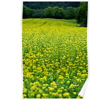 Colza - A green and yellow rural landscape Poster