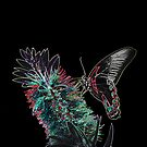 Neon Butterfly by Robert Abraham