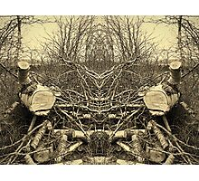 The Log Double Photographic Print
