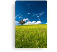 single tree on bright meadow Canvas Print