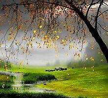 Tranquillity  by Igor Zenin