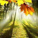 Forest Light  by Igor Zenin