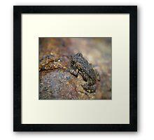 Blender Frog Framed Print