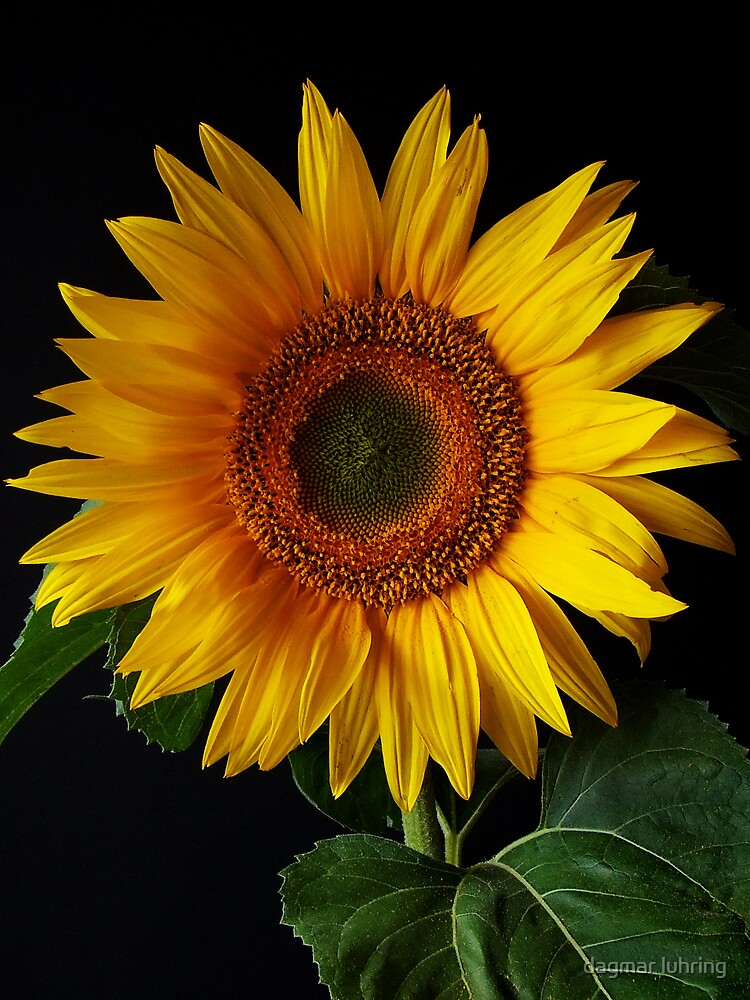 yellow... by danapace