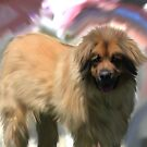 Leonberger... by Cazzie Cathcart