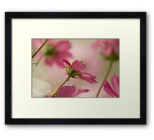 Last of the Cosmos ~ 01 Framed Print