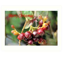 Berries II Art Print
